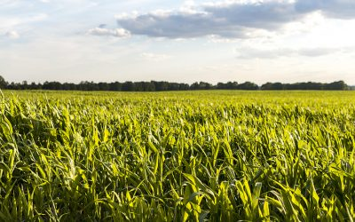 Organic agriculture in the context of the EU