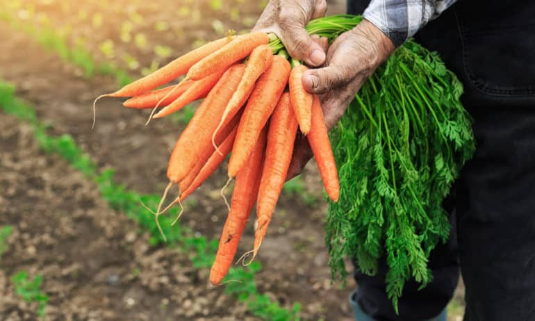 Одржливо земјоделство