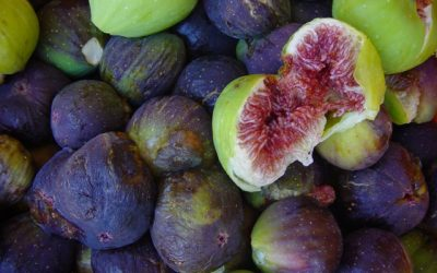 Organic and successful: Miss Fig from Poljica near Zadar
